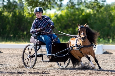 Driving Derby with Small Horse