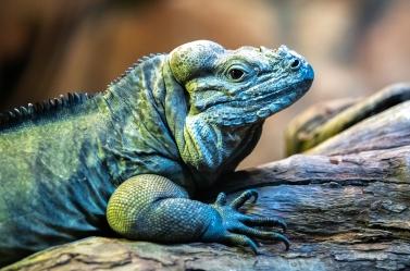 Zoo Reptile